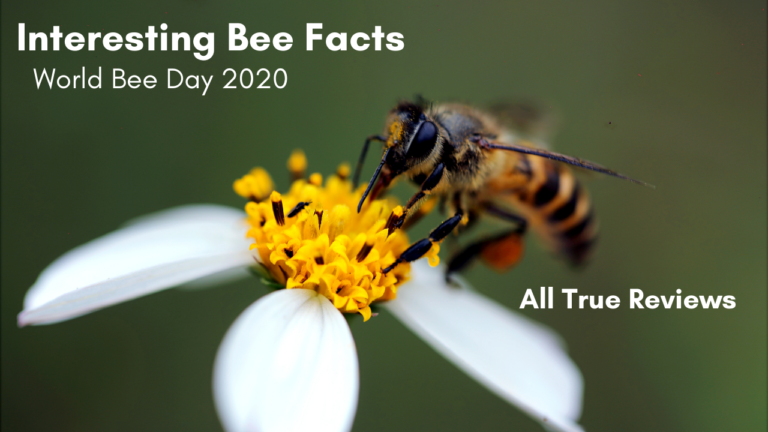 World Bee Day 2020