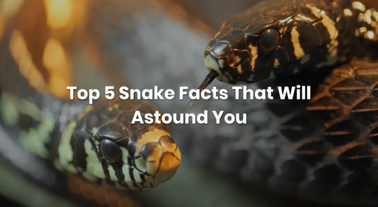 Top snake facts